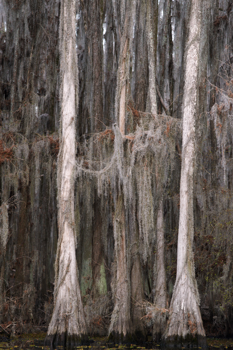 Caddo Lake 032913-1663