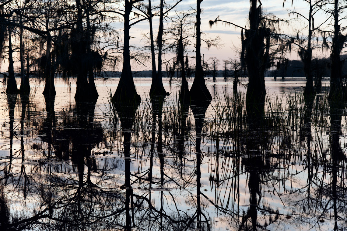 Caddo Lake 032913-379
