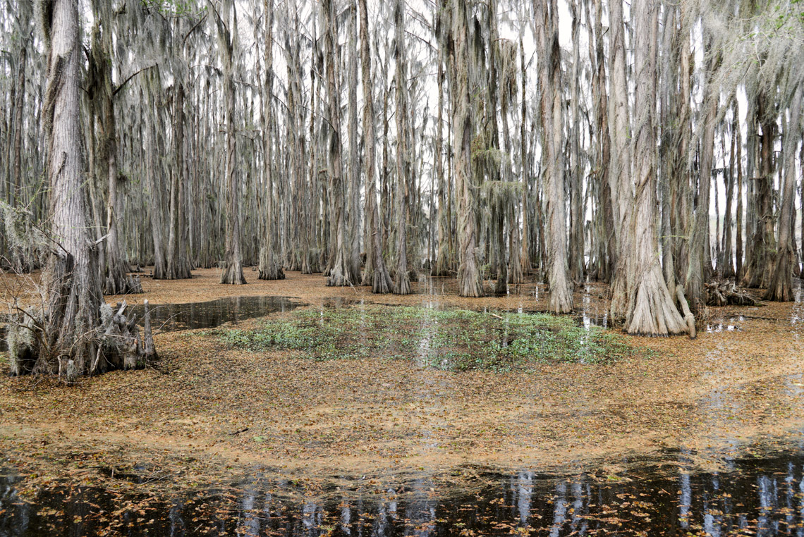 Caddo Lake 040614-0460