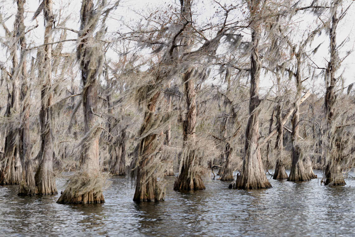Caddo Lake 040614-0703