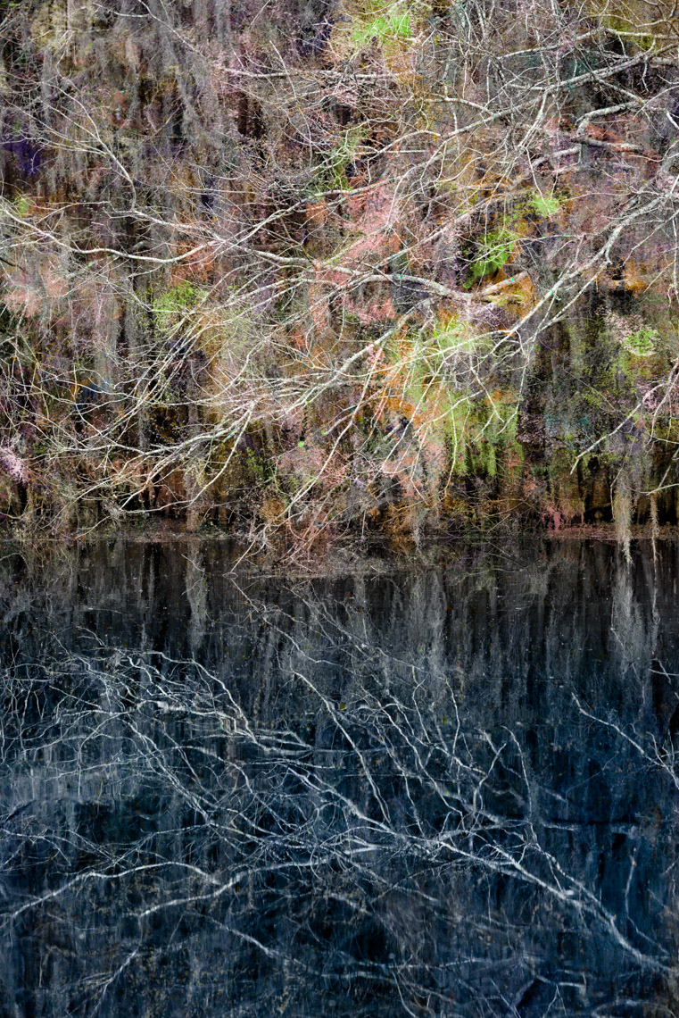 Composite1 Caddo Lake 040614-0583fl